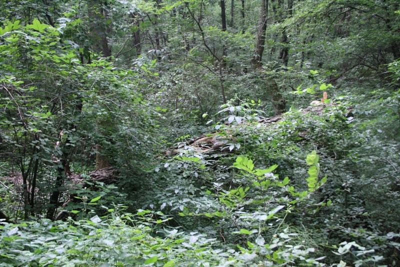 parc natural comana (1)