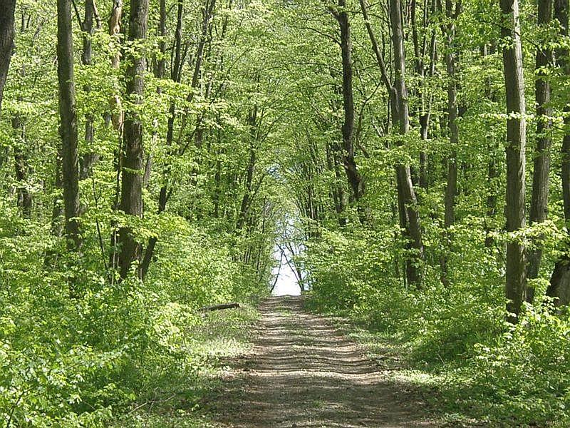 parc natural comana (18)